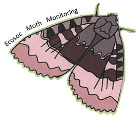 Ecosoc moth monitoring project